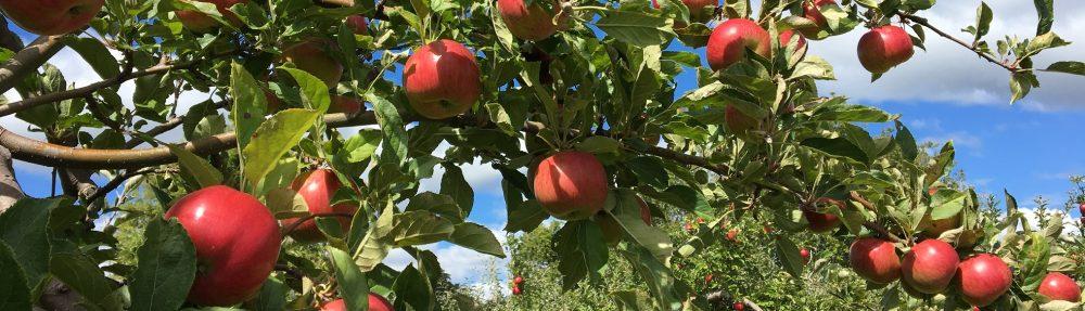 Pieter's Appleyard